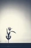 minimalism Royaltyfri Fotografi