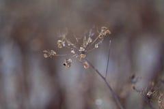 Minimalism av naturen Royaltyfria Bilder