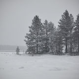 Minimalisme d'hiver Image libre de droits