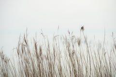 Minimalismo in acqua fotografie stock libere da diritti