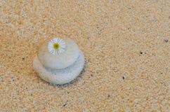 MINIMALISMO 01 DA CAMOMILA fotografia de stock royalty free
