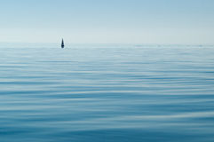 Minimalismo: Un solo salpa su un lago pulito Immagini Stock
