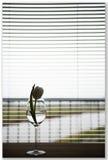minimalismus Lizenzfreies Stockbild