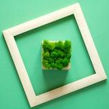 minimalismus Meisterwerk im Holzrahmen Moos im Topf Eco Konzept stockbilder