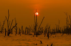 Minimalist Concept.Sunset At Beach With Death Trees.Silhouette P. Hoto Stock Photo