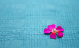 Minimalist five-petal flowers, texture and background Stock Photography