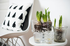 Minimalist furniture and hyacinths Stock Images