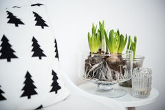 Minimalist furniture and hyacinths Stock Image