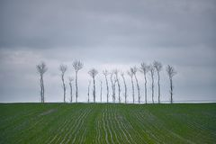 Minimalist landscape. Alone trees on green field. And clouds Royalty Free Stock Photo