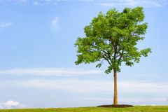 Minimalist landscape with lone tree stock photography
