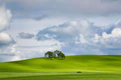 Minimalist Landscape of rolling hills and cluster of trees. Under partially cloudy skies, four trees cast long shadows from sun rays on a green rolling hillside Stock Images
