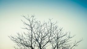 Minimal Leafless Treetop. Top part of leafless treetop on clear sky as minimalism photo style royalty free stock photos