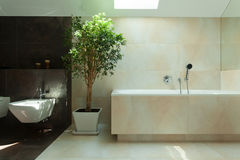 Minimalist modern bathroom in daylight. View of minimalist modern bathroom in daylight Royalty Free Stock Photography