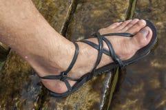 Minimalist sandal. Closeup of man's foot wearing black leather minimalist sandal on wet slippery algae covered wooden planks Royalty Free Stock Photography