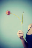 Minimalist som skjutas av hållande purpurfärgad tulpan för kvinna Royaltyfri Foto