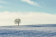 Minimalist of tree on snowy hill Royalty Free Stock Photos