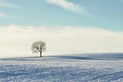Minimaliste d'arbre sur la colline neigeuse photos libres de droits