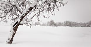 minimalistic χειμώνας τοπίων Στοκ εικόνες με δικαίωμα ελεύθερης χρήσης