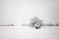 minimalistic χειμώνας τοπίων Στοκ φωτογραφίες με δικαίωμα ελεύθερης χρήσης