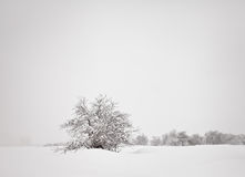 minimalistic χειμώνας τοπίων Στοκ εικόνα με δικαίωμα ελεύθερης χρήσης