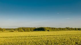 Minimalistic упрощает предпосылку красивых урожаев и леса Стоковые Фото