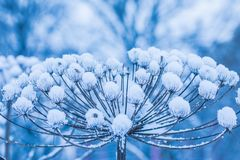 The minimalistic beautiful nature background of old grass or weed under the snow in the cold frost an cloudy day stock images