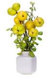 Minimalistic Blumenstrauß Zweige der japanischen Quitte Lizenzfreies Stockfoto