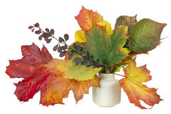 Minimalistic  bouquet  - autumn maple leaves Stock Images