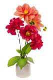Minimalistic  bouquet  - mini dahlia red flowers Stock Photography