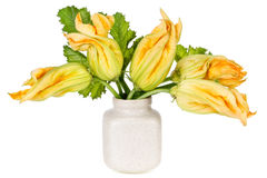 Minimalistic  bouquet of zucchini squash flowers Stock Photos