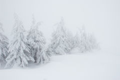 Minimalistic Christmas trees under heavy snow in mist Stock Photos