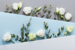 Minimalistic concept of paper card decorated beautiful white flowers and eucalyptus leaves on pastel background top view. Flat lay. Style royalty free stock images