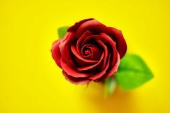 Minimalistic de uma imagem artificial da rosa do vermelho fotografou no estúdio isolado no amarelo Fotos de Stock
