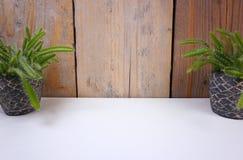Minimalistic domu rośliny kaktus w minych kamieni garnkach na białym i drewnianym tle z kopii przestrzenią dla twój swój teksta zdjęcie royalty free