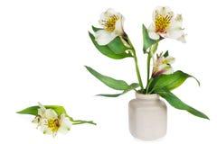 Minimalistic leichter Blumenstrauß Lizenzfreie Stockfotos