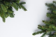Minimalistic greeting card for Christmas. Conifer tree branches stock images