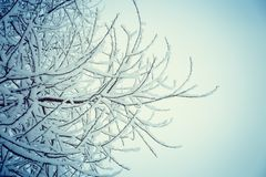 Tree branch covered with snow against a cloudy sky royalty free stock images