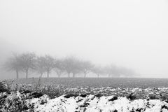 Minimalistic landscape with trees in the field on snowy mist Royalty Free Stock Image