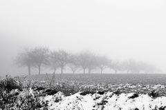 Minimalistic landscape with trees in the field on snowy mist Stock Images
