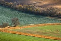 Minimalistic-Landschaft mit den Wellenhügel-, Grünen und Braunenfeldern stockfotografie