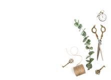 Minimalistic mieszkania rocznika nieatutowych narzędzi zielony eukaliptus rozgałęzia się zdjęcia royalty free