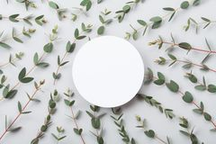Minimalistic nature mockup of empty round card and eucalyptus leaves top view. Flat lay style. Minimalistic nature mockup of empty round card and eucalyptus royalty free stock photos