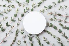 Minimalistic-Naturmodell der leeren runden Karte und des Eukalyptus verlässt Draufsicht flache Lageart lizenzfreie stockfotos