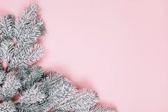 Minimalistic Pastellhintergrund des Rosas mit schneebedecktem branck des Tannenbaums stockfoto
