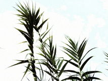 Minimalistic plants. Lovely plants in some lovely place Royalty Free Stock Image