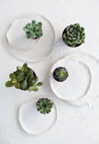 Minimalistic still life with ceramic plates and green succulents. On white textured background, stylish home decor Royalty Free Stock Image
