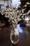 Minimalistic still life, willow blossoms in glass vase Stock Photo
