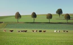 Minimalistisch Landschap met Bomen en Koeien Stock Fotografie