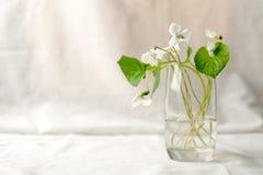 minimalizm w spokojnym ?yciu Odbitkowy astronautyczny tło, Wiejski abstrakcjonistyczny tło z wazą i wiosna biali kwiaty, nieocios obraz royalty free