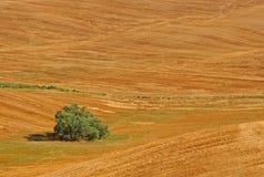 Minimo in Toscana in lajatico fotografia stock libera da diritti
